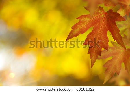 Fall. Autumn - stock photo