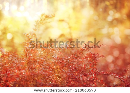 Fall, autumn, leaves background. A tree branch with autumn leaves of a maple on a blurred background. Landscape in autumn season  - stock photo