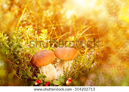 Fall, autumn, leaves background. Mushrooms and berries in the forest, woods  with autumn leaves on a blurred background. Landscape in autumn season  - stock photo