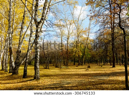Fall autumn trees  in park - stock photo