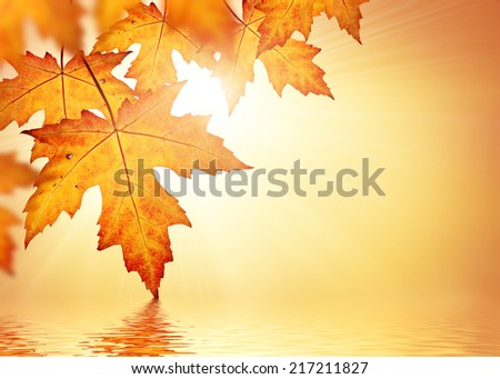 Fall background border with orange autumn leaves  - stock photo