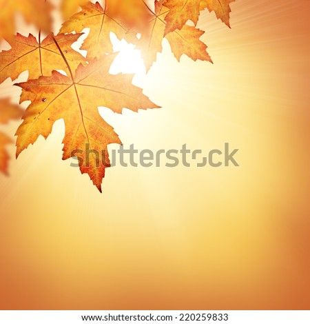 Fall background with orange leaves  - stock photo