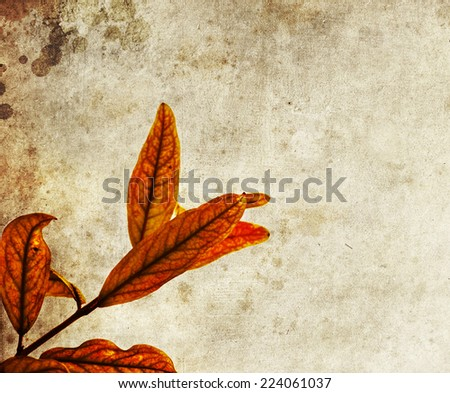 Fall background with yellow pomegranate leaves, shallow focus, macro photography. autumn yellow leaves, - stock photo