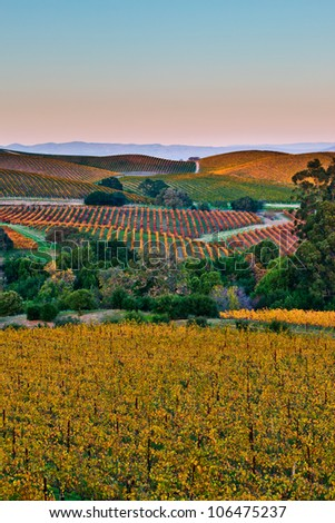 Fall color drapes the rolling hills of Napa and Sonoma Valleys in California. - stock photo