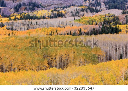 Fall color in a forest, Utah, USA. - stock photo