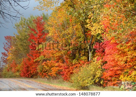 Fall Colors on a Road Near Traverse City - stock photo
