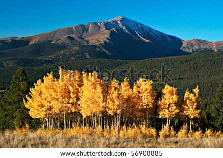 Fall colors on Aspens below Mt. Silverheels near Breckenridge, Colorado - stock photo