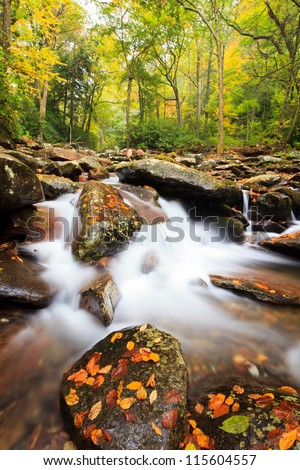 Fall Colors, smoky mountains national park Chimeny tops trail - stock photo