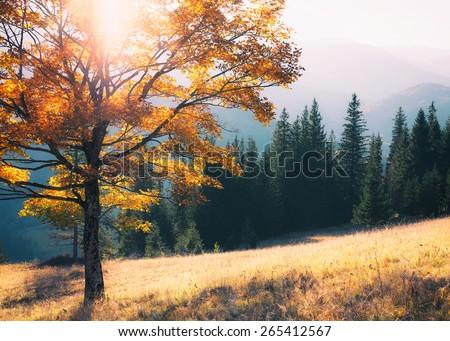 Fall colors tree - stock photo