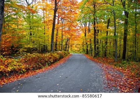 Fall foliage - stock photo