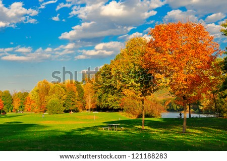 Fall foliage and a field. - stock photo