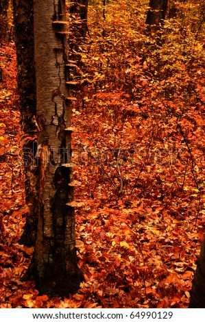 Fall foliage at the Great Swamp National WIldlife Refuge in Basking Ridge, New Jersey - stock photo