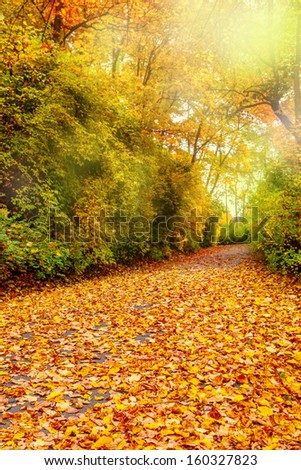 Fall foliage in a park - stock photo