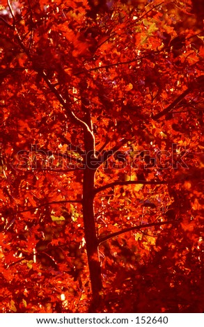 Fall foliage in autumn. - stock photo