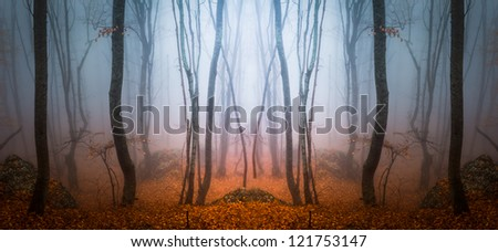 fall forest - stock photo