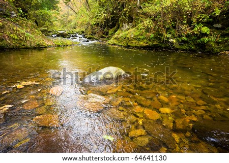 fall forest stream Elomovsky in russian Primorye - stock photo