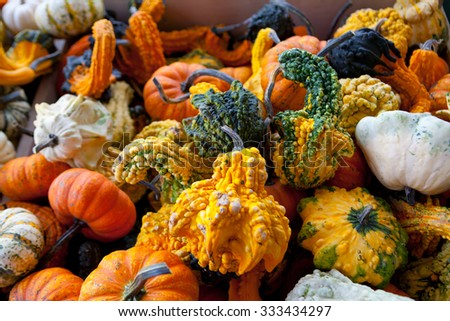 Fall Gourds Assortment - stock photo