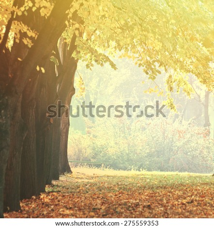 Fall in a autumn park  - stock photo