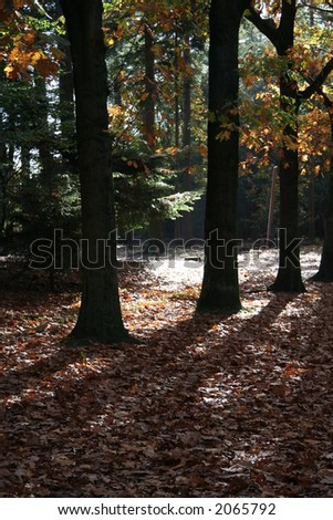 Fall in a dutch forest - stock photo