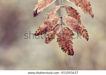 Fall in forest - stock photo