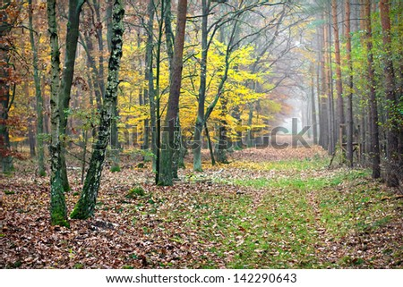Fall in forest. Misty path - stock photo