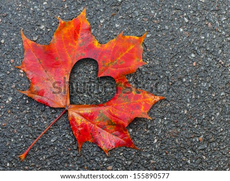 Fall in love photo metaphor. Red maple leaf with heart shaped hole lays on dark asphalt road - stock photo