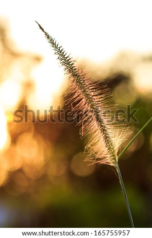 Fall in Meadow - stock photo