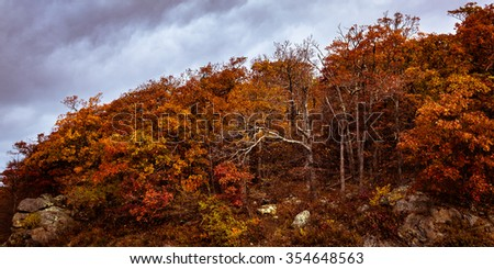 Fall in Shenandoah National Park - stock photo
