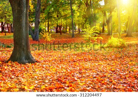 Fall in the sunny park with bright orange trees. Autumn natural landscape - stock photo