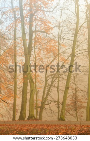 Fall landscape. View of the autumn park with trees leaves and pathwa, misty autumnal foggy day. - stock photo