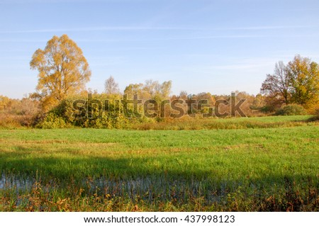 Fall lawn oak stands with gold leaves.  Lonely beautiful autumn tree. Autumn landscape.  - stock photo