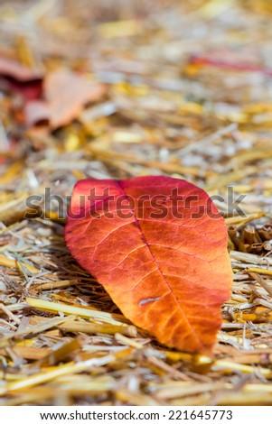 fall leaf, selective focus - stock photo