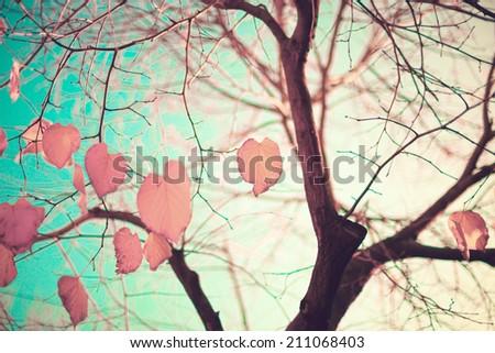 Fall leafs over aqua mint sky - stock photo
