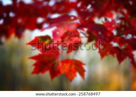 Fall Leaves Blur - stock photo