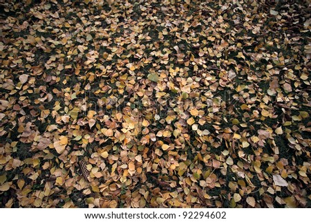 Fall leaves carpet on the ground - stock photo