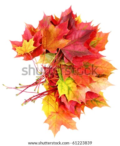 fall leaves decoration - stock photo