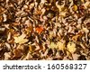 Fall leaves on the ground background texture pattern - stock photo