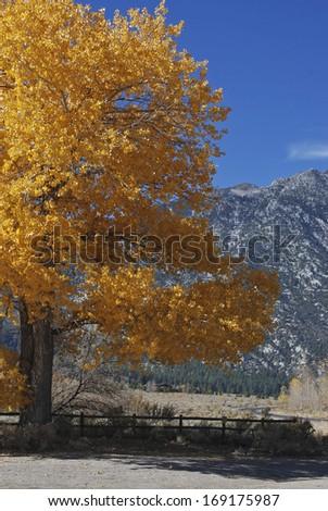 Fall magnificence set against Sierra Nevada backdrop, NV - stock photo