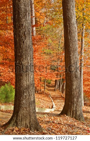 Fall path framed by two tree trunks - stock photo