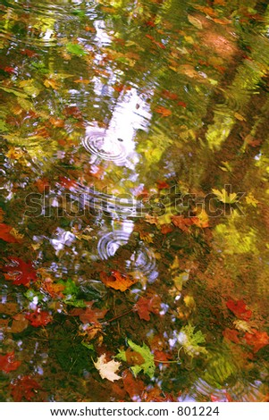Fall Puddle - stock photo