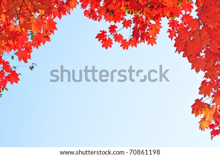 fall red maple leaves in the blue sky - stock photo