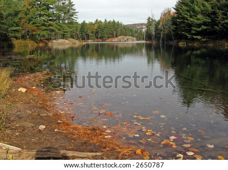 Fall's sunny day at Killarney Lake, maple leaves onthe water - stock photo