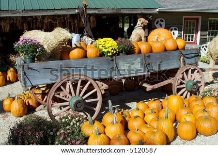 fall scene with pumpkins - stock photo