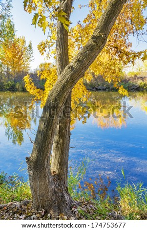Fall tree along the bank of a river - stock photo