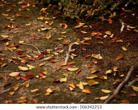 Fallen Autumn Leaves - stock photo