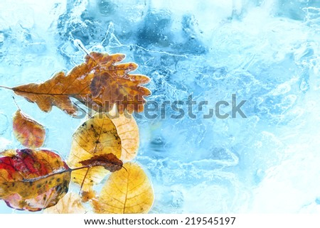 Fallen autumn leaves in the blue ice. Winter background - stock photo