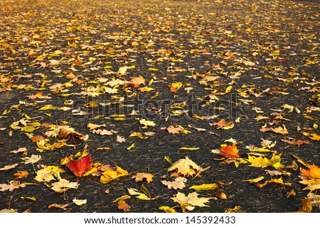 Fallen autumn leaves on the ground background - stock photo