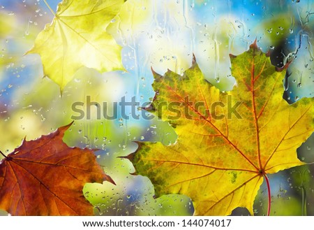 Fallen autumn leaves on wet from rain glass - stock photo