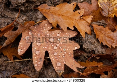 Fallen autumn leaves with water drops - stock photo