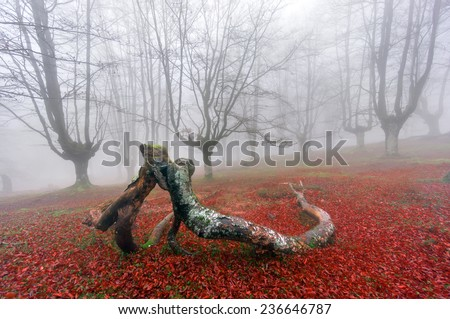 fallen branches kissing in foggy forest - stock photo